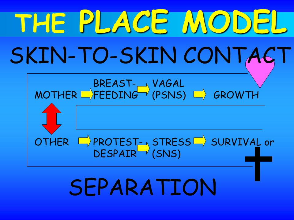 BREAST-VAGAL MOTHER FEEDING(PSNS) GROWTH OTHERPROTEST-STRESSSURVIVAL or DESPAIR(SNS) SKIN-TO-SKIN CONTACT SEPARATION PLACE MODEL THE PLACE MODEL