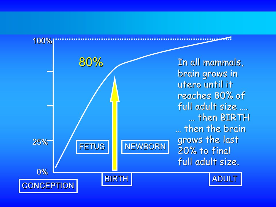 100% 25% 0% ADULTBIRTH CONCEPTION FETUSNEWBORN In all mammals, In all mammals, brain grows in brain grows in utero until it utero until it reaches 80% of reaches 80% of full adult size ….