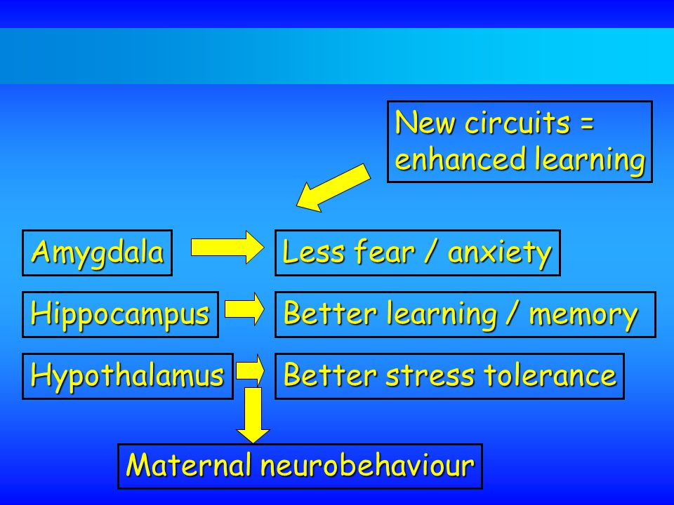 New circuits = enhanced learning Less fear / anxiety Amygdala Better learning / memory Hippocampus Better stress tolerance Hypothalamus Maternal neurobehaviour