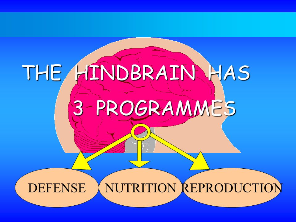 THE HINDBRAIN HAS 3 PROGRAMMES DEFENSENUTRITIONREPRODUCTION
