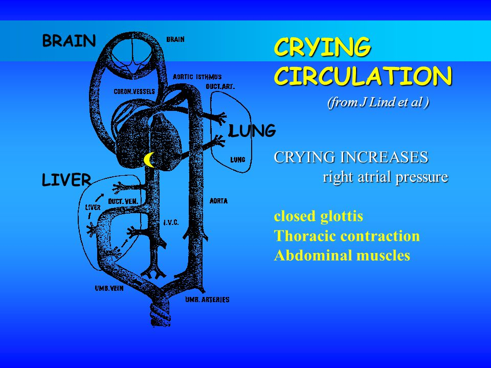 CRYINGCIRCULATION (from J Lind et al ) CRYING INCREASES right atrial pressure closed glottis Thoracic contraction Abdominal muscles BRAIN LUNG LIVER