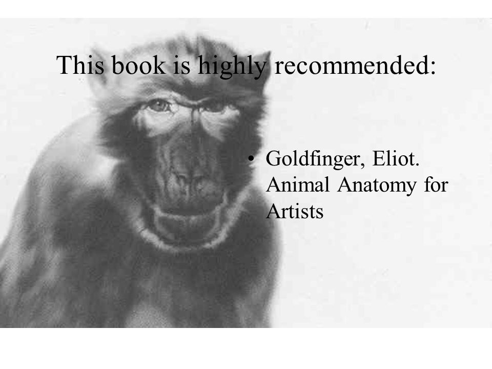 This book is highly recommended: Goldfinger, Eliot. Animal Anatomy for Artists