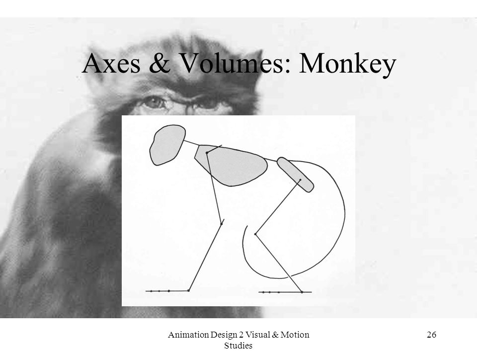 Animation Design 2 Visual & Motion Studies 26 Axes & Volumes: Monkey