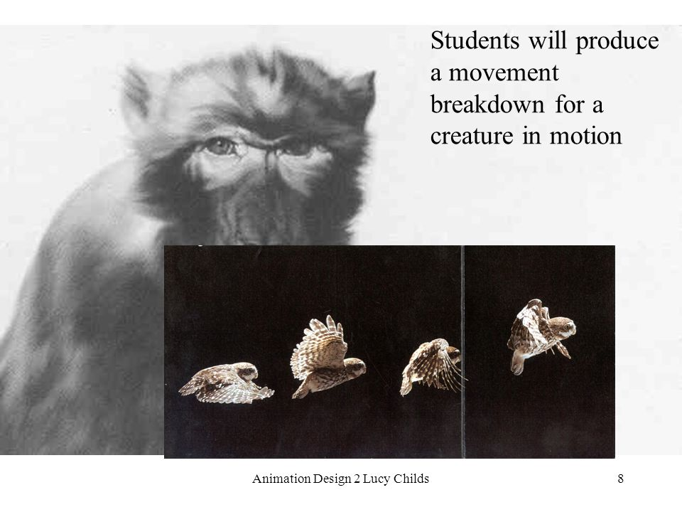 Animation Design 2 Lucy Childs8 Students will produce a movement breakdown for a creature in motion