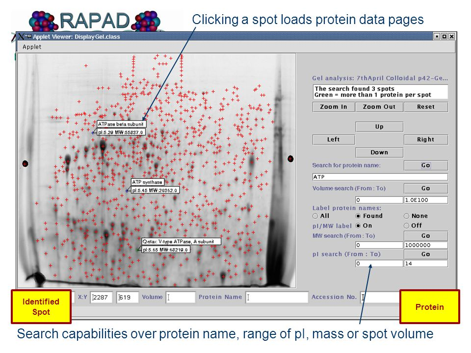 Search capabilities over protein name, range of pI, mass or spot volume Clicking a spot loads protein data pages Identified Spot Protein