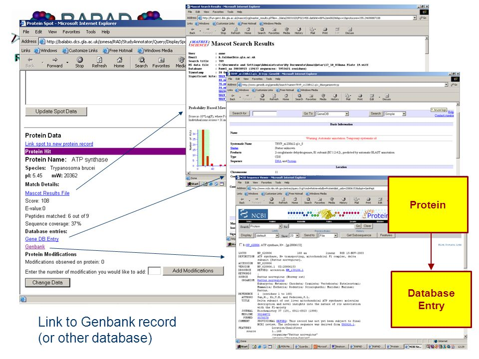 Link to Genbank record (or other database) Protein Database Entry