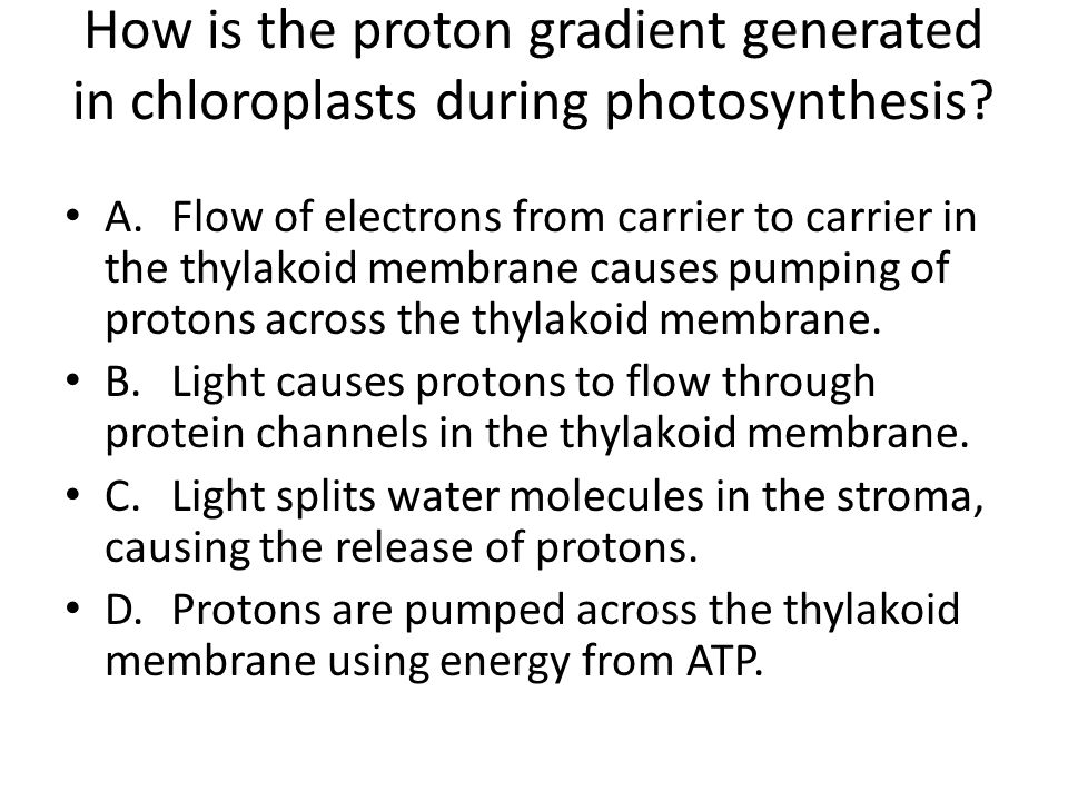 How is the proton gradient generated in chloroplasts during photosynthesis? A.Flow of electrons from carrier to carrier in the thylakoid membrane caus