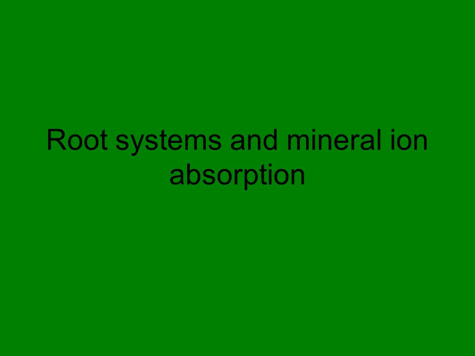Mineral uptake by roots Extensive root systems increase the surface area available for absorption.