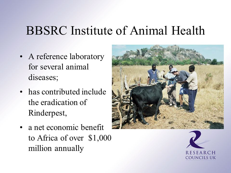 BBSRC Institute of Animal Health A reference laboratory for several animal diseases; has contributed include the eradication of Rinderpest, a net economic benefit to Africa of over $1,000 million annually
