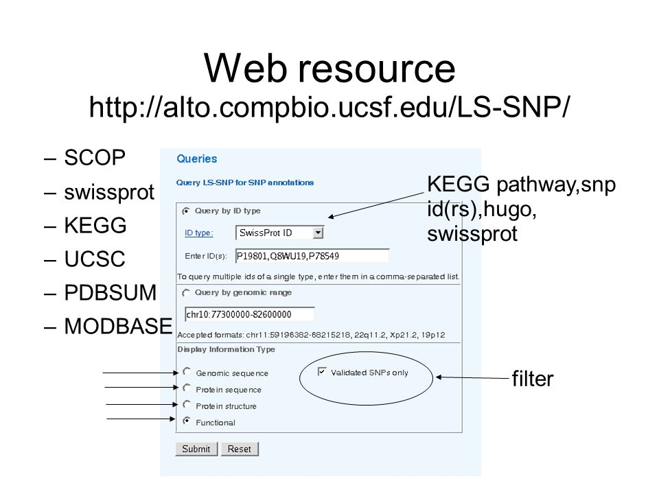 Web resource http://alto.compbio.ucsf.edu/LS-SNP/ KEGG pathway,snp id(rs),hugo, swissprot filter –SCOP –swissprot –KEGG –UCSC –PDBSUM –MODBASE