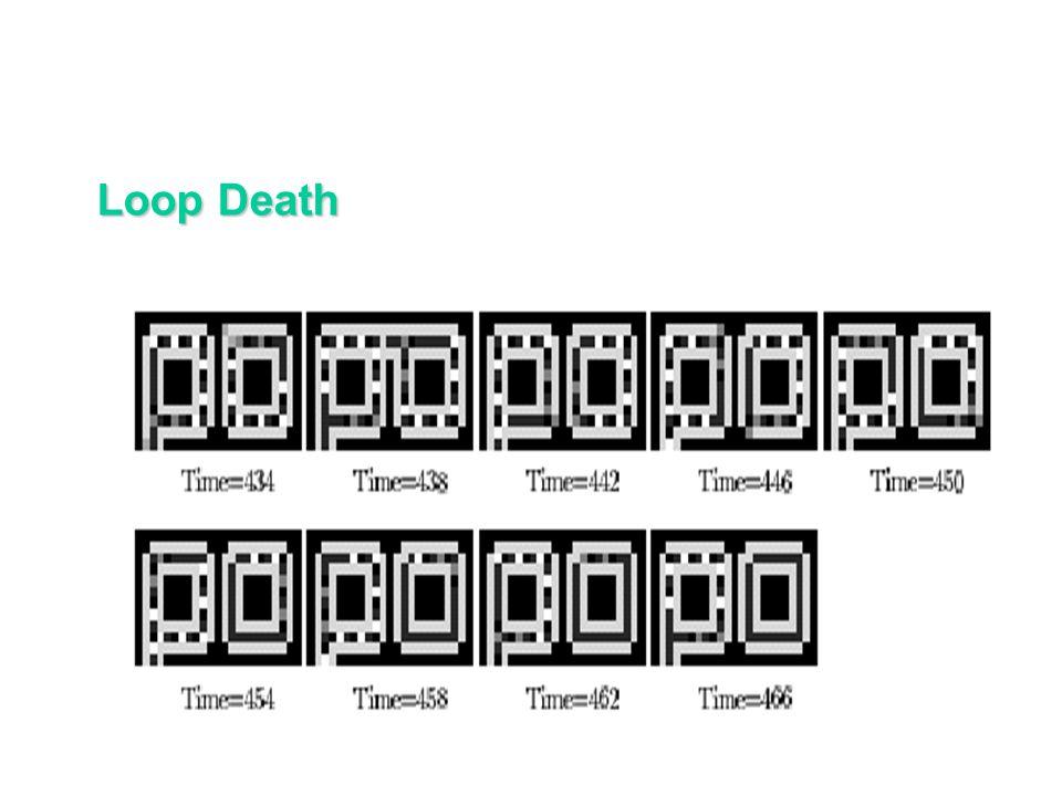 Loop Reproduction