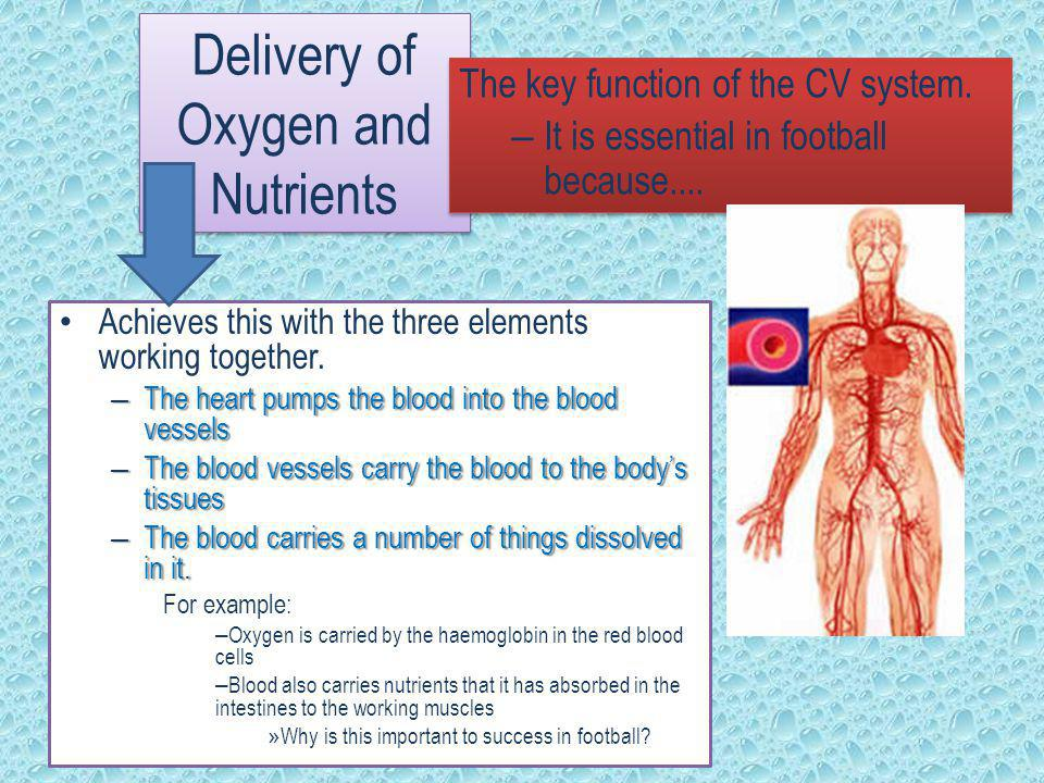 Delivery of Oxygen and Nutrients The key function of the CV system. – It is essential in football because.... The key function of the CV system. – It
