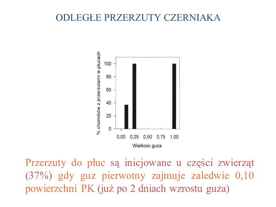 ODLEGŁE PRZERZUTY CZERNIAKA Przerzuty do płuc są inicjowane u części zwierząt (37%) gdy guz pierwotny zajmuje zaledwie 0,10 powierzchni PK (już po 2 dniach wzrostu guza)