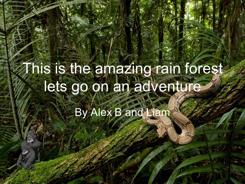 This is the amazing rain forest lets go on an adventure By Alex B and Liam