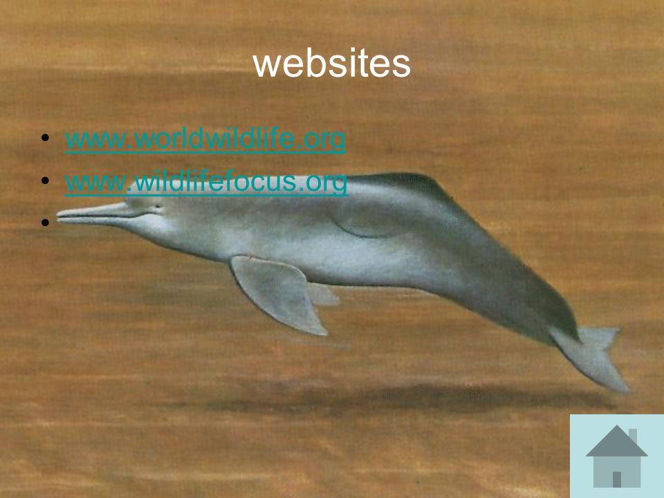 websites www.worldwildlife.org www.wildlifefocus.org