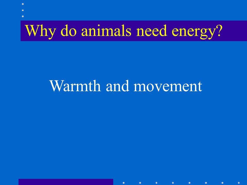 Why do animals need energy Warmth and movement