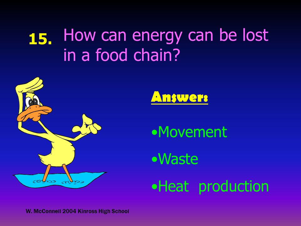 W. McConnell 2004 Kinross High School 15. How can energy can be lost in a food chain.
