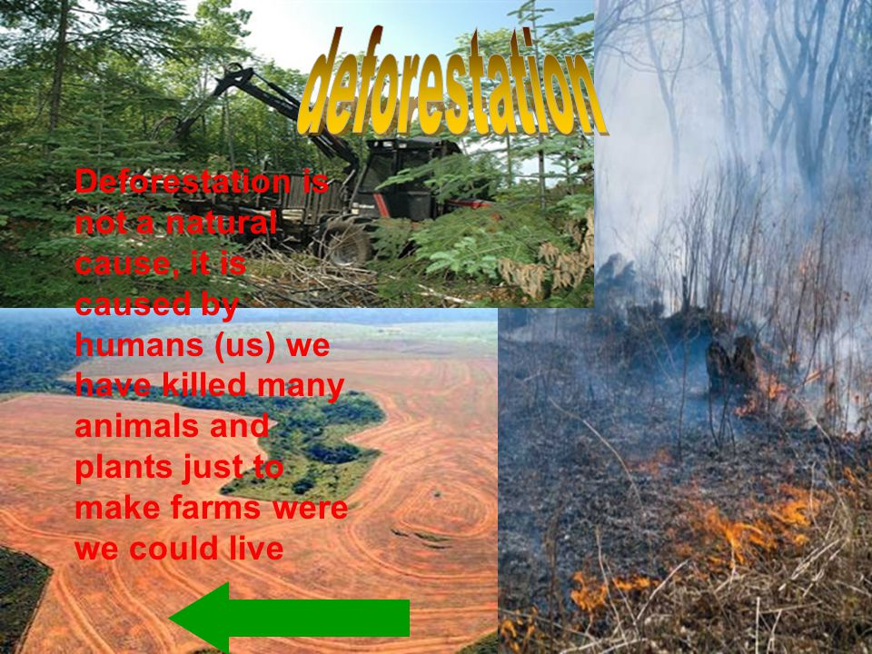 Deforestation is not a natural cause, it is caused by humans (us) we have killed many animals and plants just to make farms were we could live