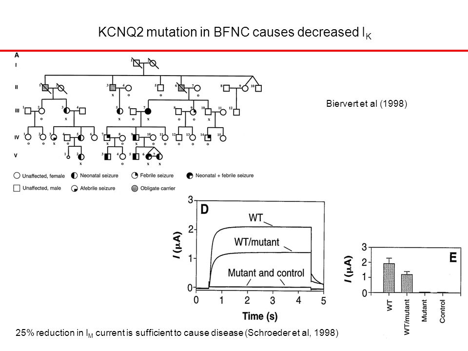 Biervert et al (1998) KCNQ2 mutation in BFNC causes decreased I K 25% reduction in I M current is sufficient to cause disease (Schroeder et al, 1998)