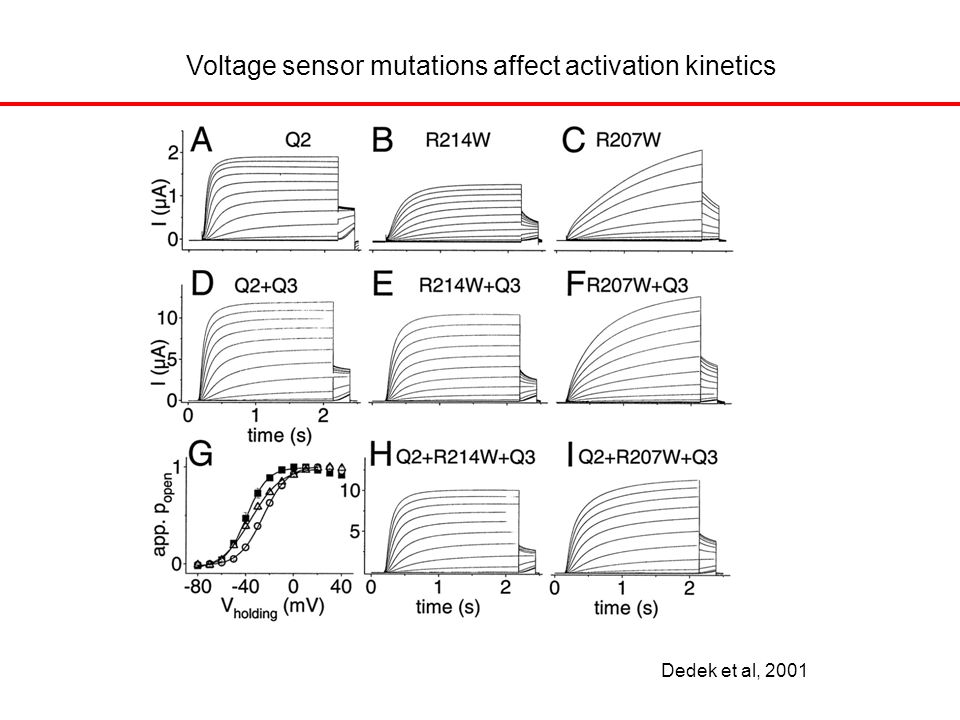 Dedek et al, 2001 Voltage sensor mutations affect activation kinetics