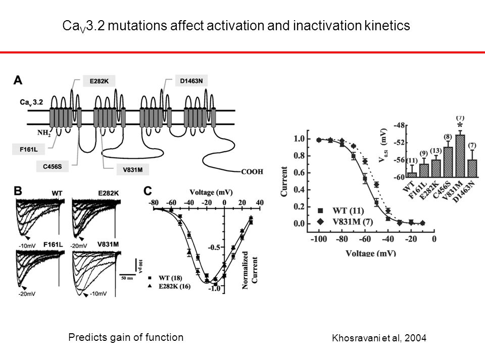Ca V 3.2 mutations affect activation and inactivation kinetics Khosravani et al, 2004 Predicts gain of function