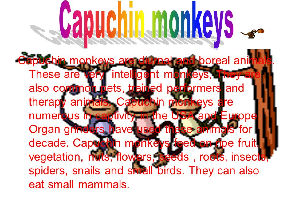 Capuchin monkeys are diurnal and boreal animals.