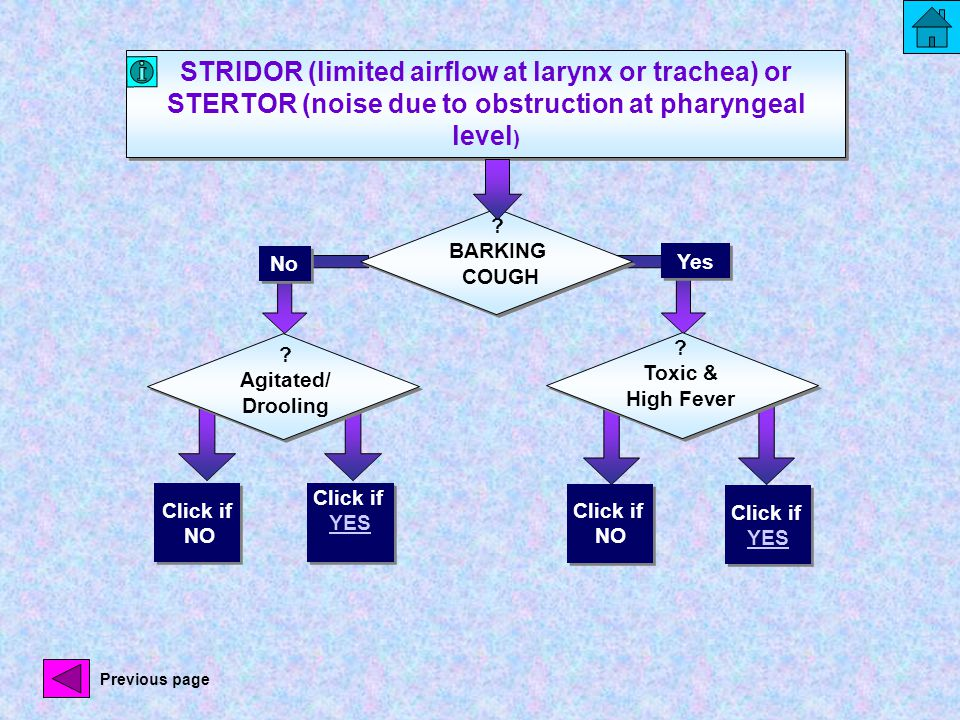 STRIDOR (limited airflow at larynx or trachea) or STERTOR (noise due to obstruction at pharyngeal level ) No Yes .