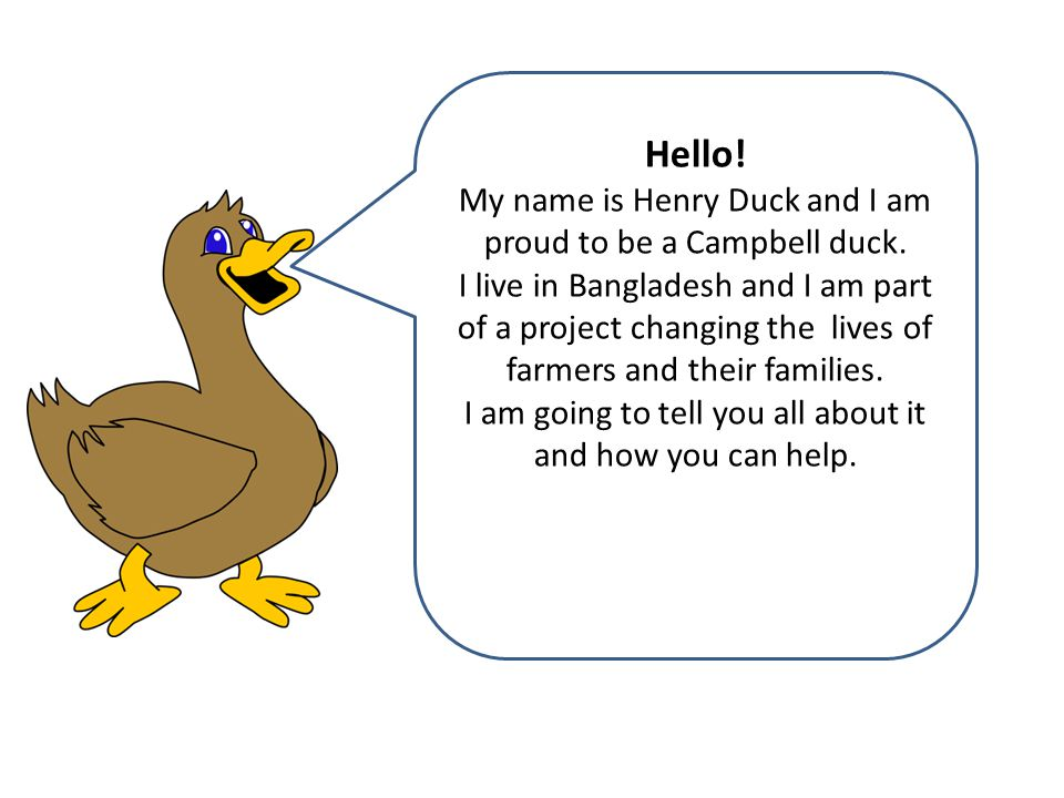 Hello. My name is Henry Duck and I am proud to be a Campbell duck.