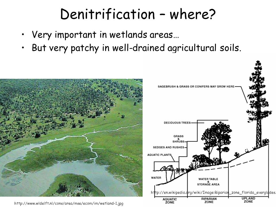 Denitrification – where? Very important in wetlands areas… But very patchy in well-drained agricultural soils. http://www.wldelft.nl/cons/area/mse/eco