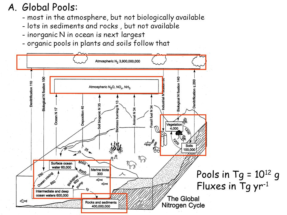 Pools in Tg Fluxes in Tg yr -1 Fluxes: several important biosphere-atmosphere N exchanges - biological: fixation, denitrification, nitrification - abiotic: industrial fixation, lightning fixation, fossil fuel and biomass burning, deposition