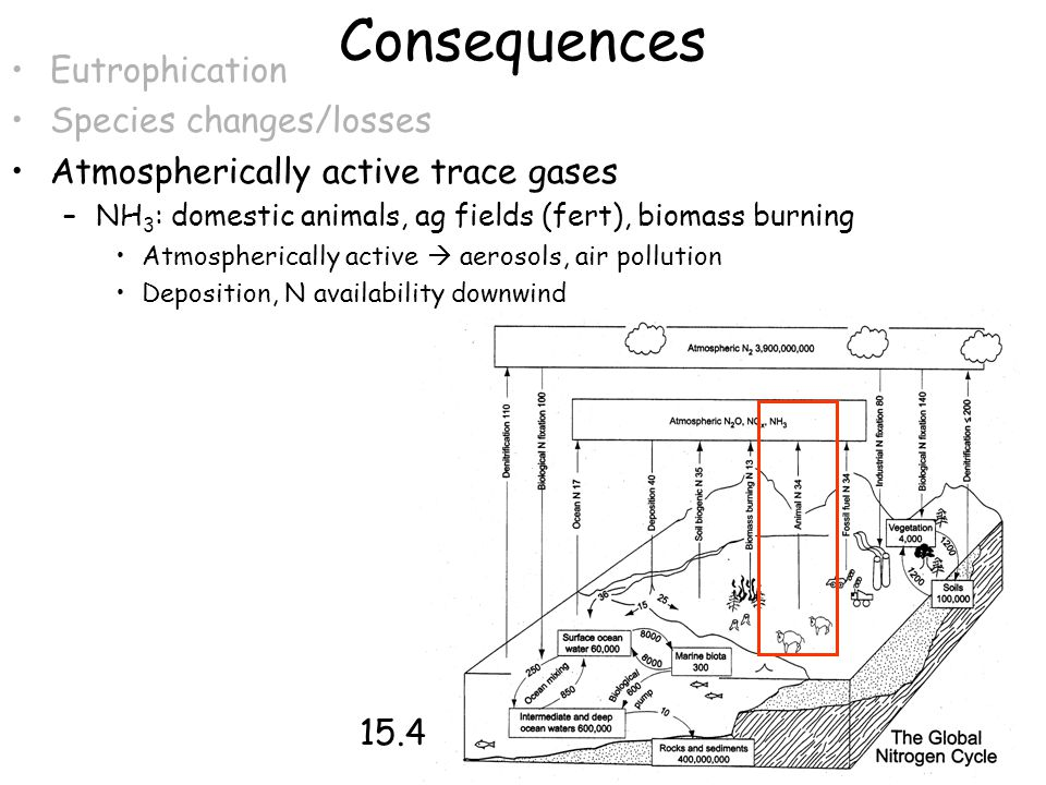 Consequences Eutrophication Species changes/losses Atmospherically active trace gases –NH 3 : domestic animals, ag fields (fert), biomass burning Atmo