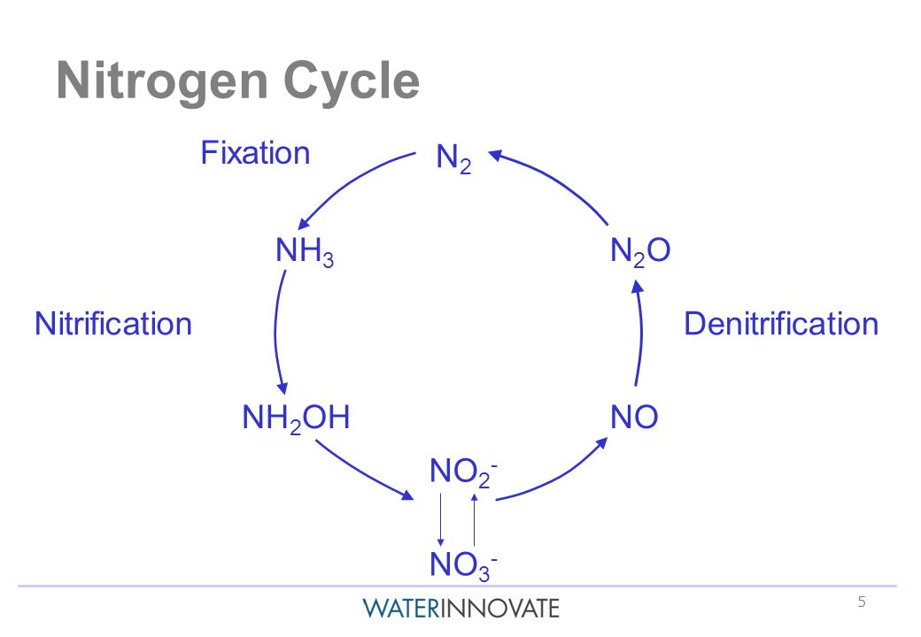 5 Nitrogen Cycle N2N2 N2ON2O NO NH 3 NH 2 OH NO 2 - NO 3 - DenitrificationNitrification Fixation