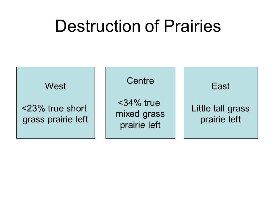 Destruction of Prairies West <23% true short grass prairie left Centre <34% true mixed grass prairie left East Little tall grass prairie left