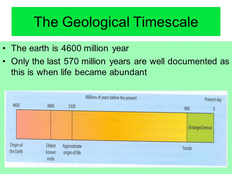 The Geological Timescale The earth is 4600 million year Only the last 570 million years are well documented as this is when life became abundant