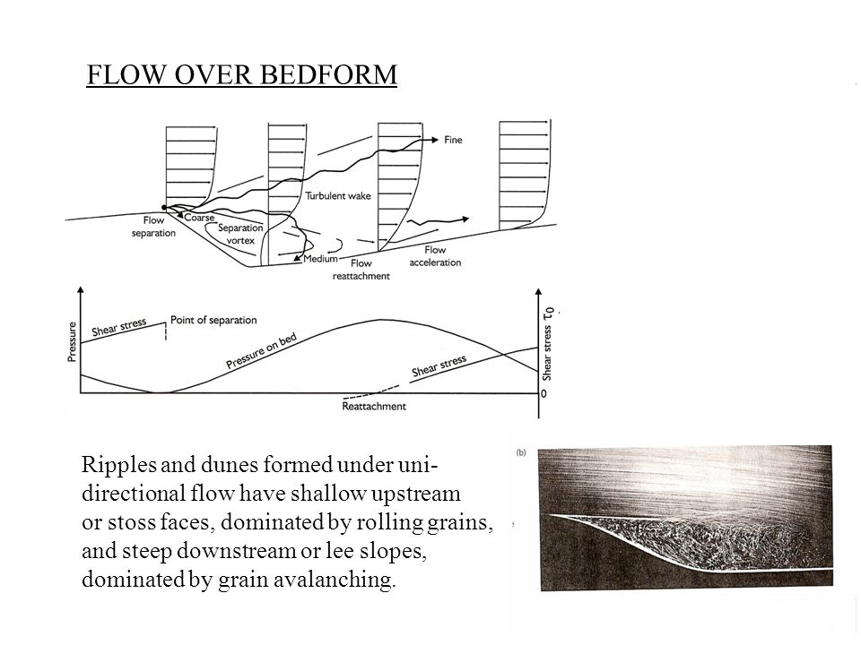 FLOW OVER BEDFORM Ripples and dunes formed under uni- directional flow have shallow upstream or stoss faces, dominated by rolling grains, and steep downstream or lee slopes, dominated by grain avalanching.
