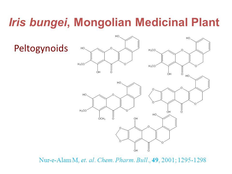 Iris bungei, Mongolian Medicinal Plant Peltogynoids Nur-e-Alam M, et.