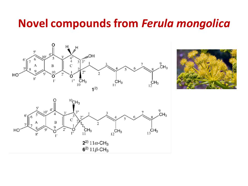 Novel compounds from Ferula mongolica