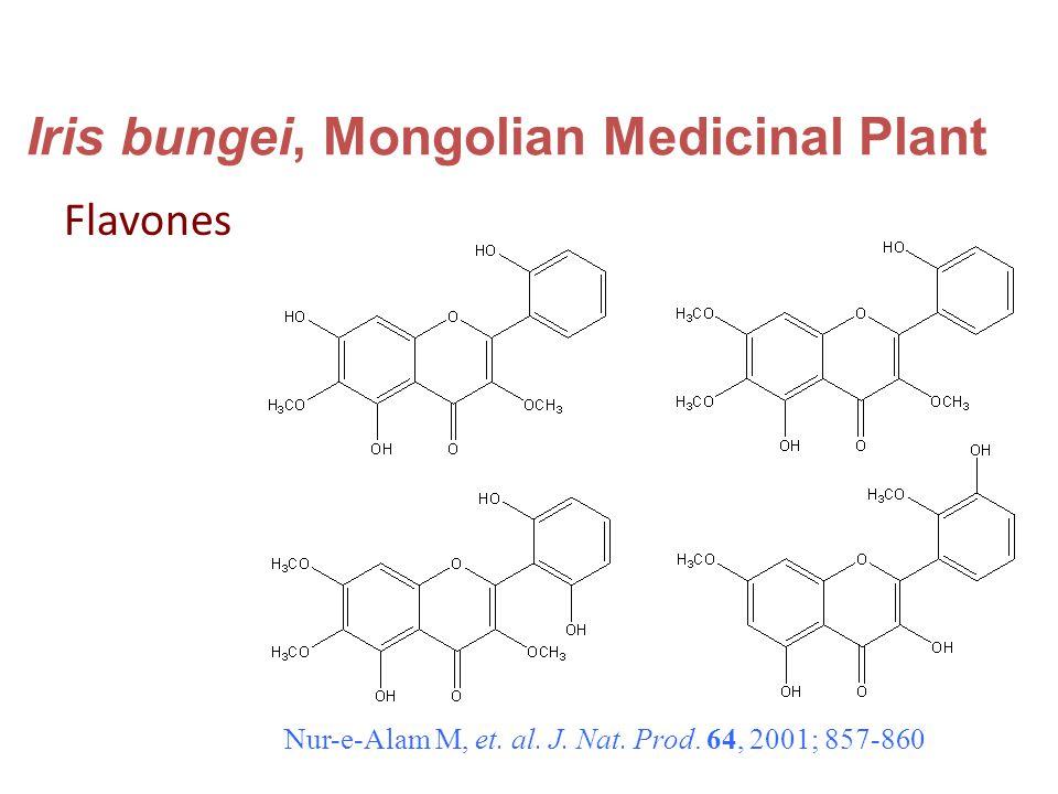 Iris bungei, Mongolian Medicinal Plant Flavones Nur-e-Alam M, et.