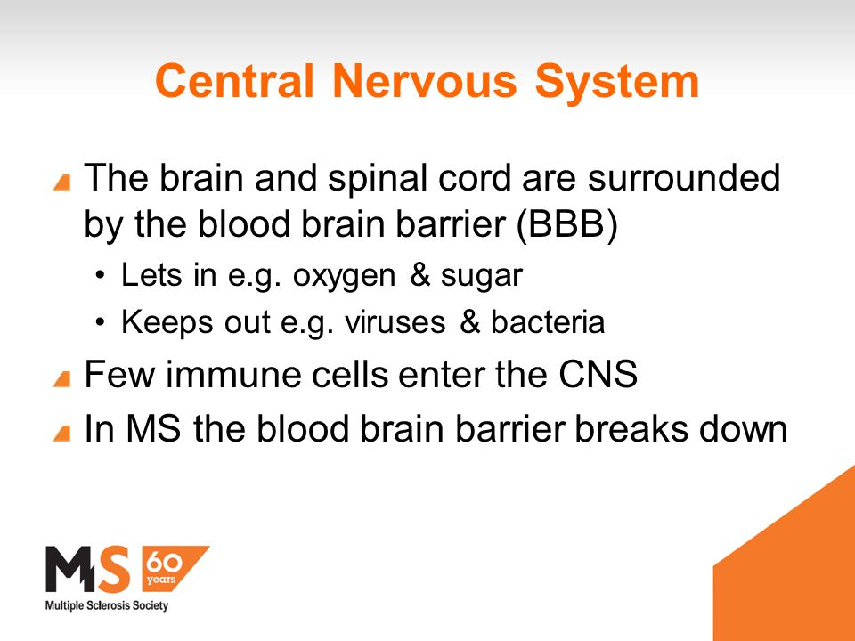 Central Nervous System The brain and spinal cord are surrounded by the blood brain barrier (BBB) Lets in e.g.
