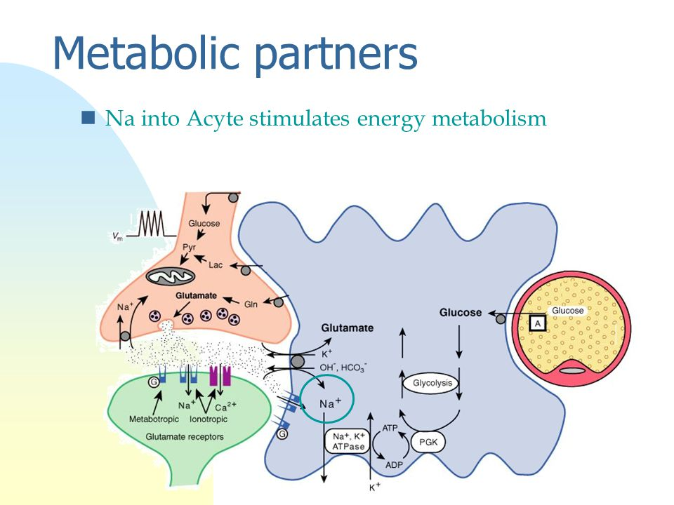 Metabolic partners nNa into Acyte stimulates energy metabolism