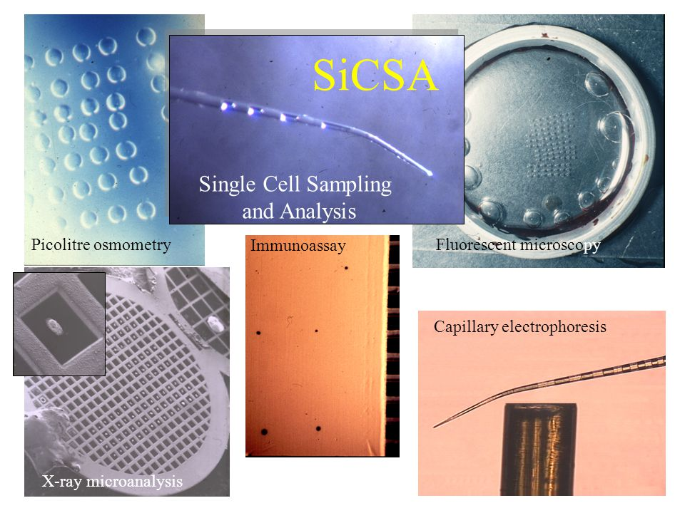 Single Cell Sampling and Analysis SiCSA Picolitre osmometry X-ray microanalysis Fluorescent microscopy Immunoassay Capillary electrophoresis