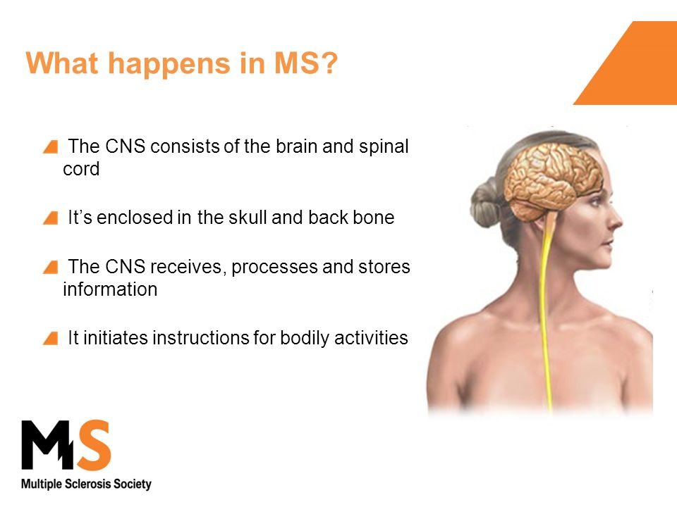 The CNS consists of the brain and spinal cord It's enclosed in the skull and back bone The CNS receives, processes and stores information It initiates instructions for bodily activities What happens in MS