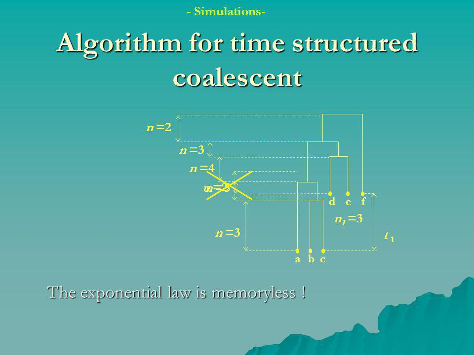 n =2 n =5 Algorithm for time structured coalescent abc def n =3 n =2 t 1 n =4 The exponential law is memoryless .
