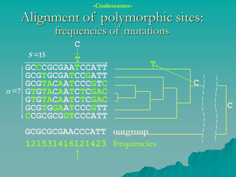 GCGCGCGAACCCATT outgroup 121531416121423 frequencies Alignment of polymorphic sites: frequencies of mutations GCCCGCGAATCCATT GCGTGCGATCCGATT GCGTACAA