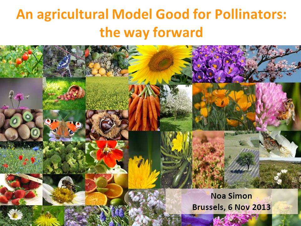 An agricultural Model Good for Pollinators: the way forward Noa Simon Brussels, 6 Nov 2013
