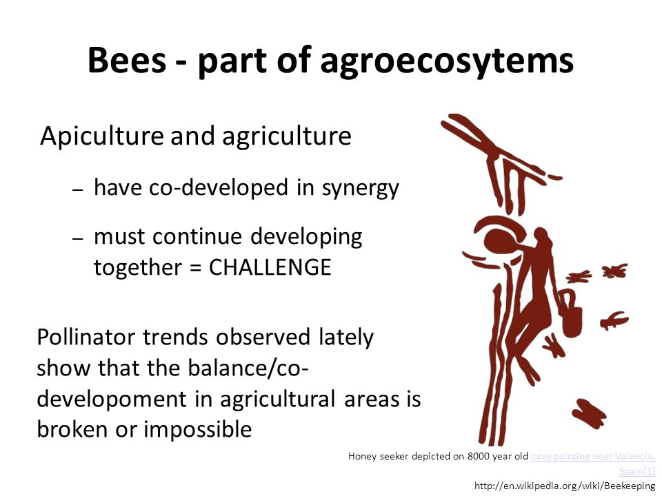 Bees - part of agroecosytems Apiculture and agriculture – have co-developed in synergy – must continue developing together = CHALLENGE Pollinator trends observed lately show that the balance/co- developoment in agricultural areas is broken or impossible Honey seeker depicted on 8000 year old cave painting near Valencia, Spain[1]cave painting near Valencia, Spain[1] http://en.wikipedia.org/wiki/Beekeeping