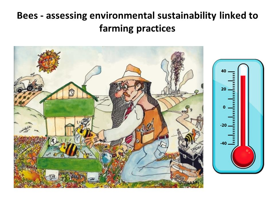 Bees - assessing environmental sustainability linked to farming practices © UNAAPI
