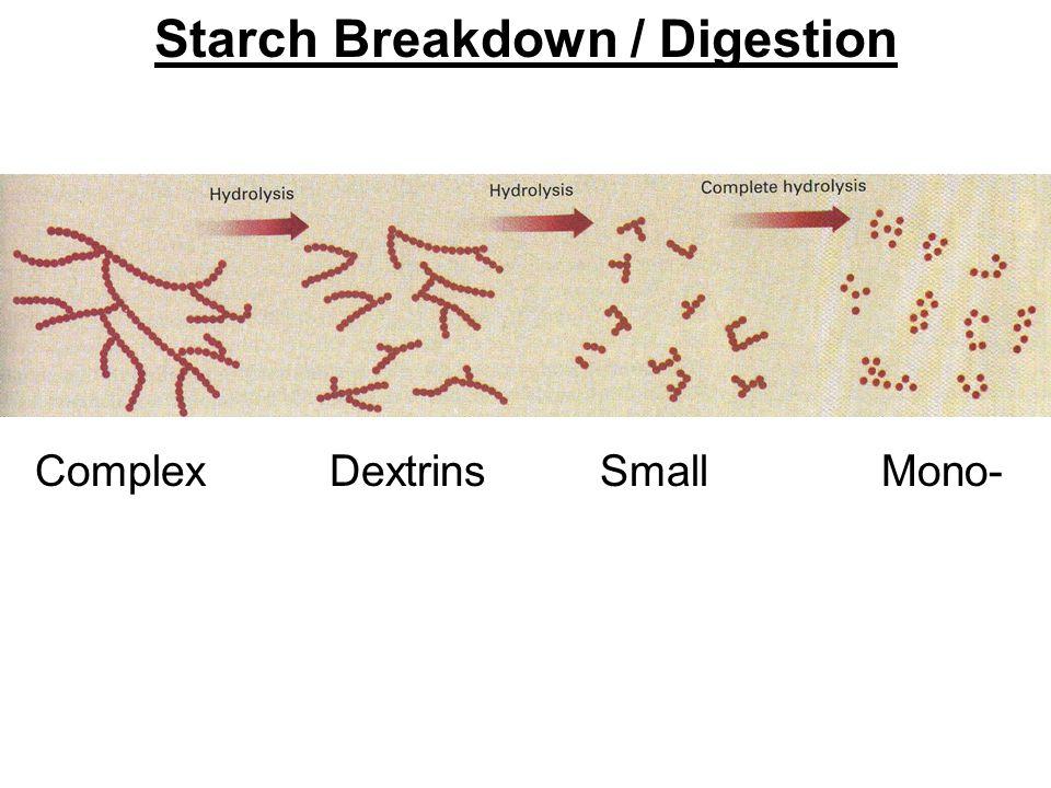 Complex Dextrins Small Mono- Starch Breakdown / Digestion