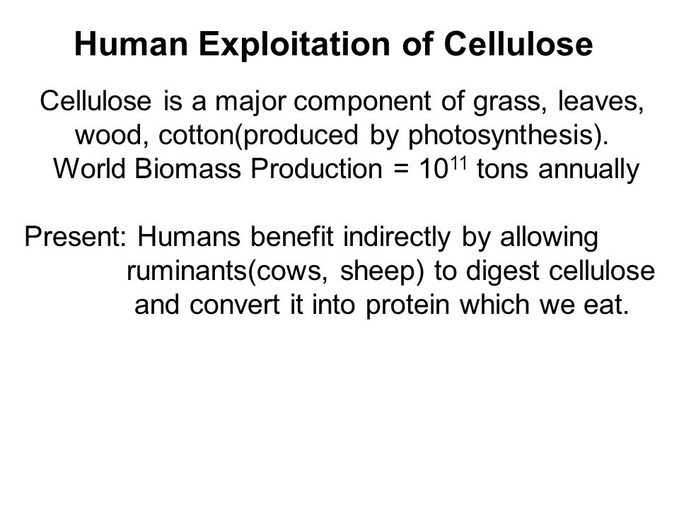 Cellulose is a major component of grass, leaves, wood, cotton(produced by photosynthesis).