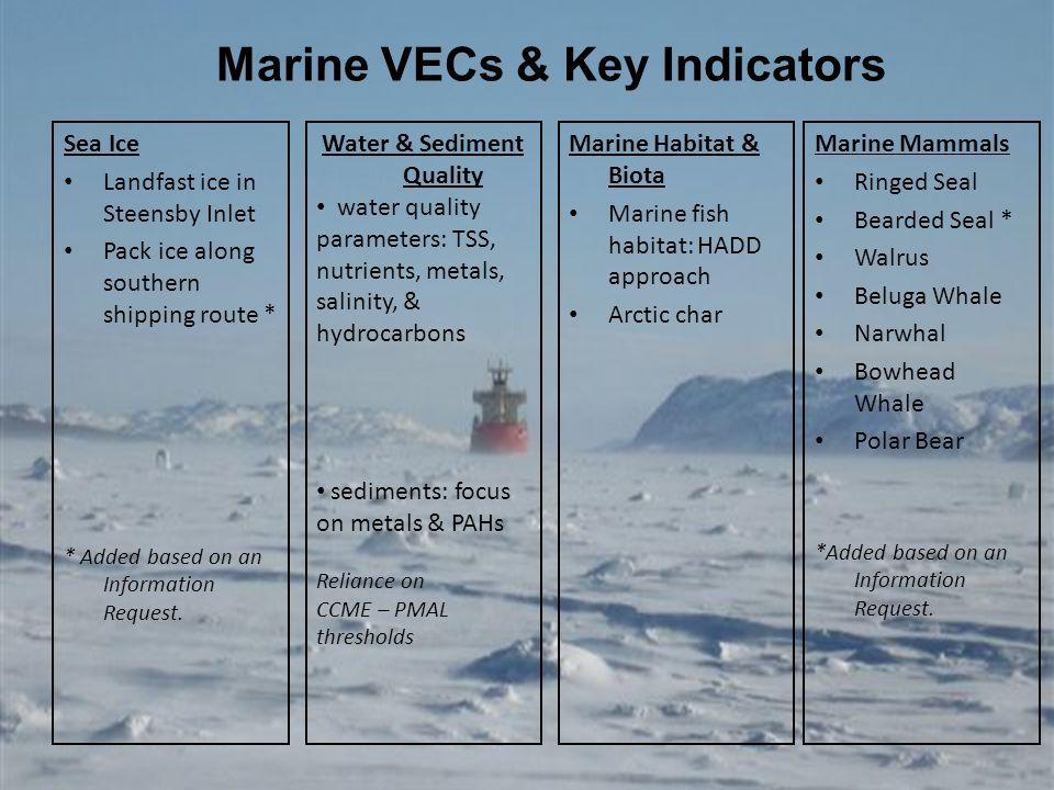 Marine VECs & Key Indicators Marine Mammals Ringed Seal Bearded Seal * Walrus Beluga Whale Narwhal Bowhead Whale Polar Bear *Added based on an Informa